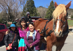 Horse and Buggy Ride Tour of Jullian